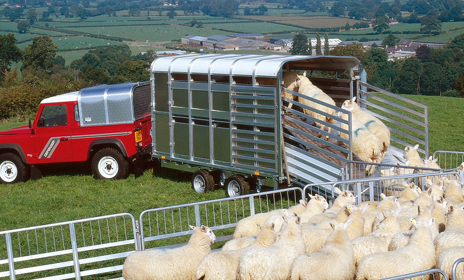 Ifor Williams DP Livestock Range